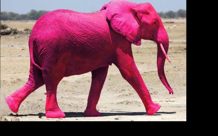 Rosa Elefanten leben glücklicher.