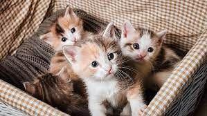 Katt unge sökes!